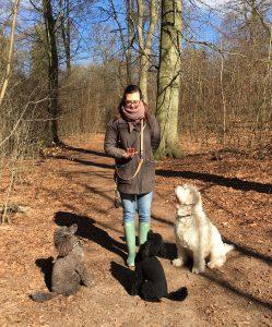 træning af hunde